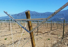 Vineyard Post For sales