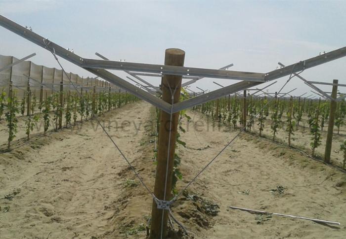Metal vineyard trellis post Galvanized vineyard post Grape post