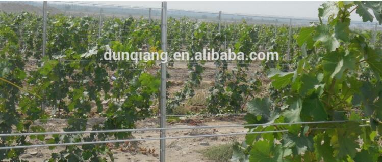 galvanized metal poles for vineyard